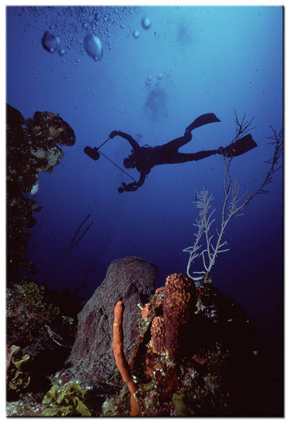 Picture of Jim Lucas taking Underwater photos in Roatan Honduras